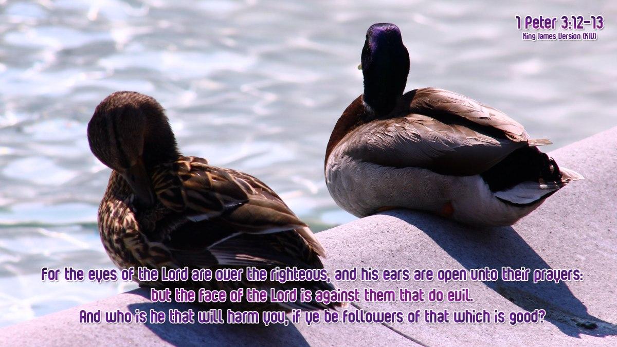 1 Peter 3:12-13